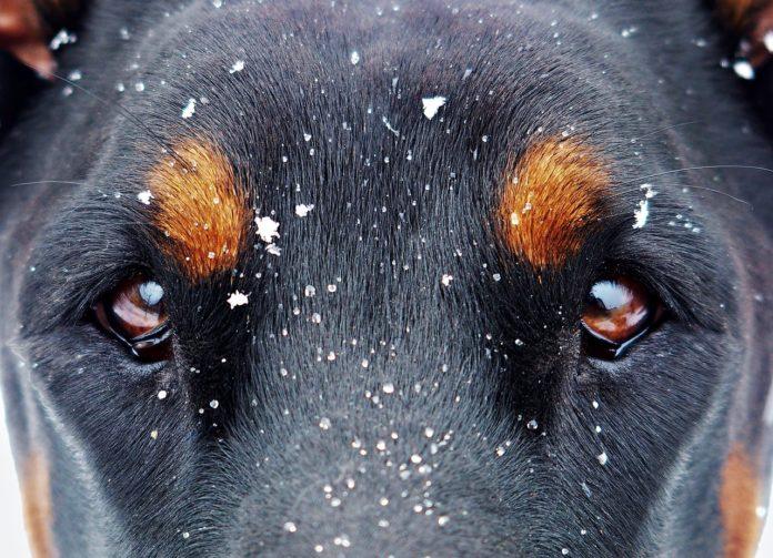 Zderzenie z psem. Czy dostaniesz odszkodowanie z OC i od kogo?