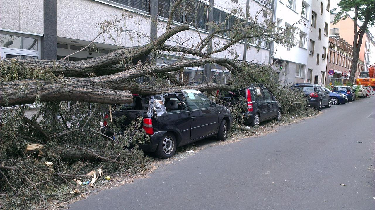 Odszkodowanie za powalone drzewo