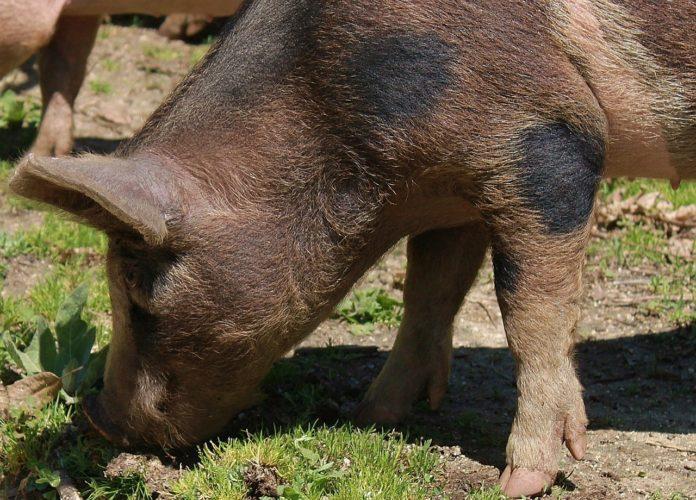 Zderzenie z dzikim zwierzęciem. Jak uzyskać odszkodowanie za wypadek z dzikiem, łosiem, sarną lub lisem?